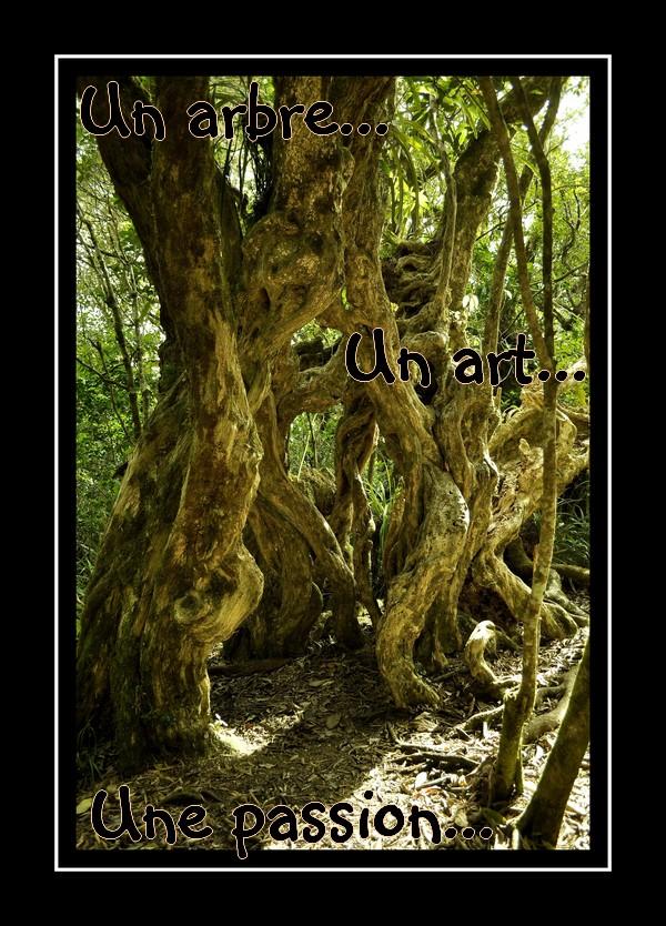 Respect 39 arbre elagage entreprise d 39 lagage la r union for Entretien jardin reunion